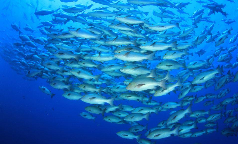 productivos del mundo acuícola