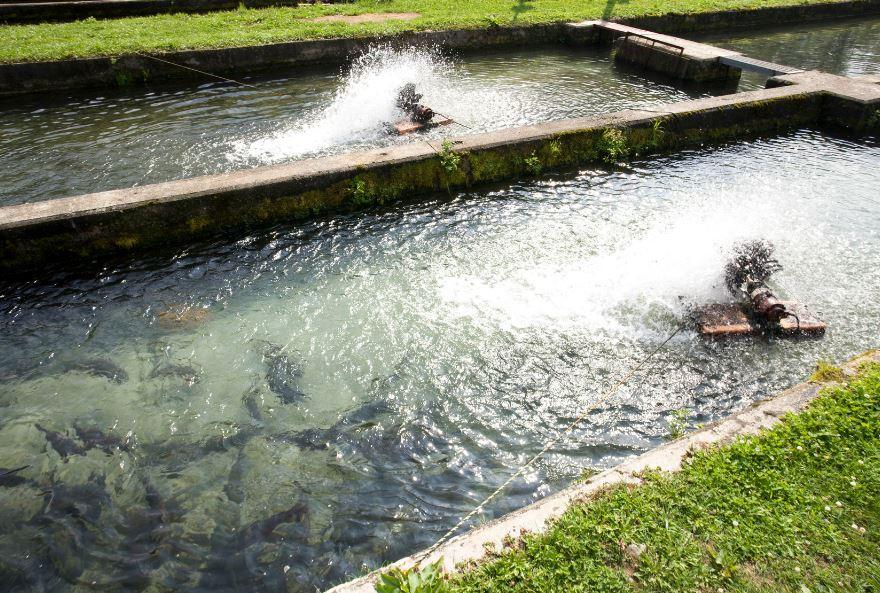 sal en industria acuícola