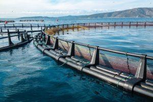 uso del sal en sector acuícola